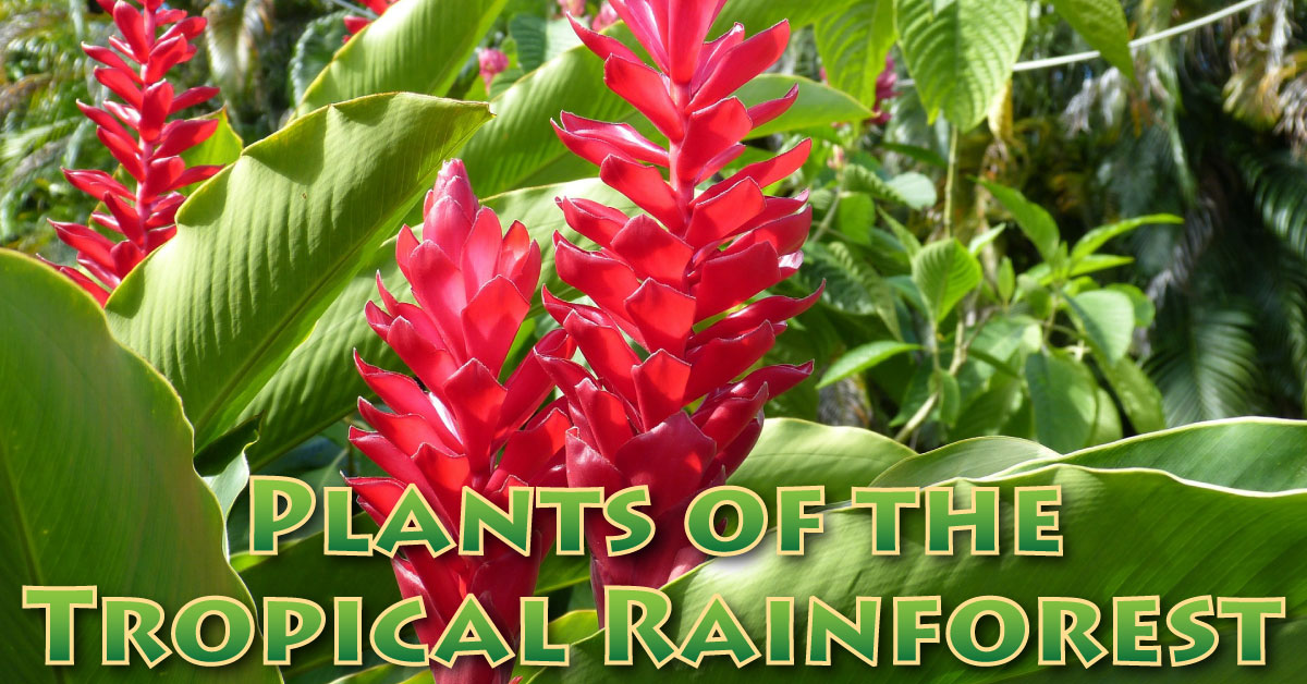 Plants In The Tropical Rainforest Pictures, Facts, Information