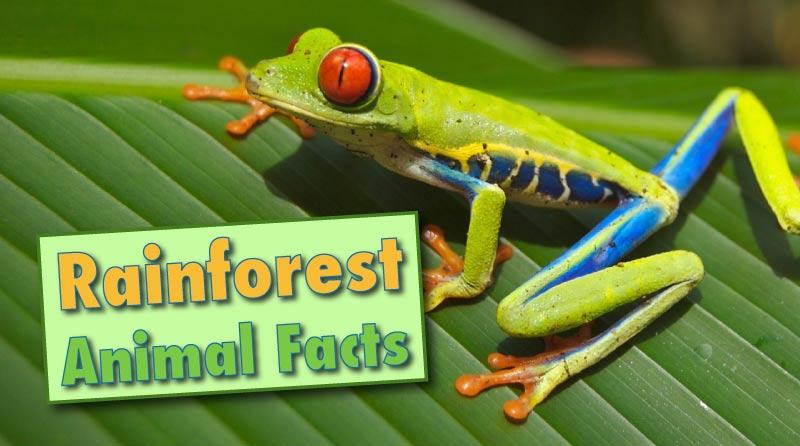 Rainforest Animals Facts