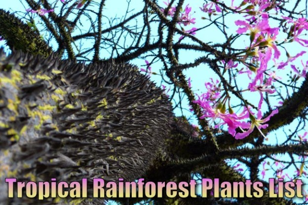 Tropical Rainforest Plants List