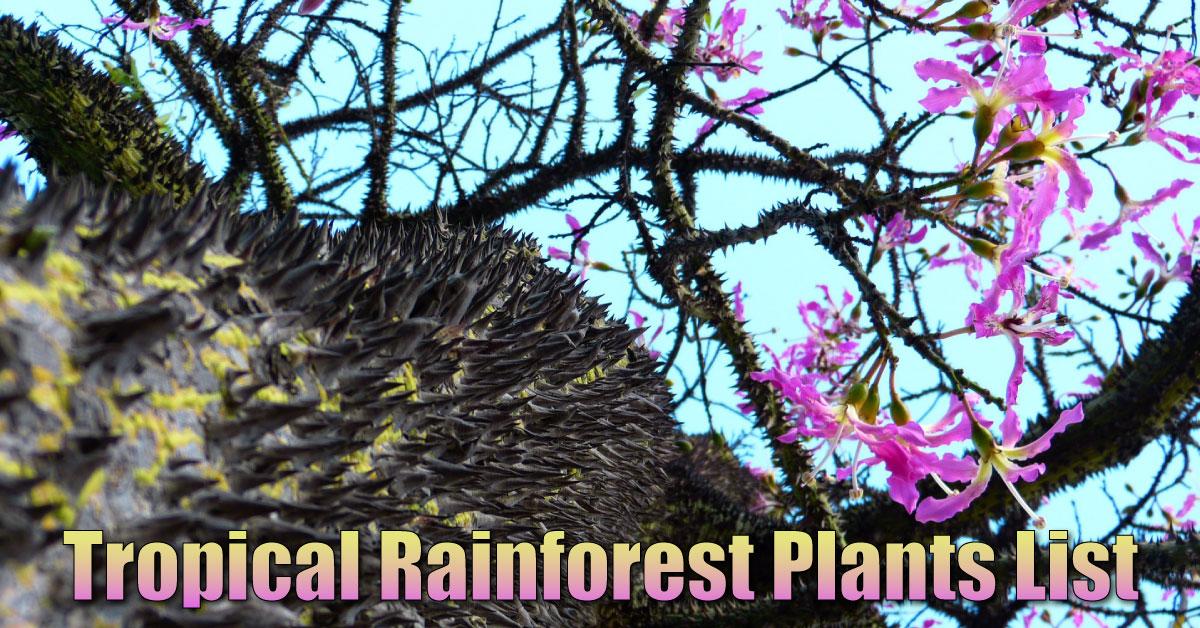 Tropical Rainforest Plants List, Information, Pictures & Facts