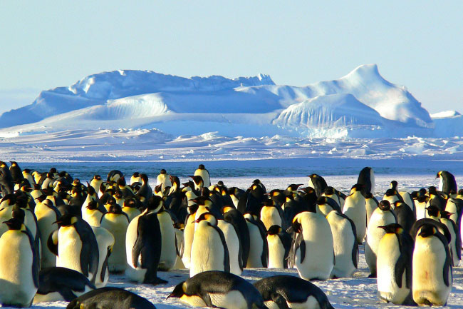 Who owns Antarctica? Emperor Penguins.