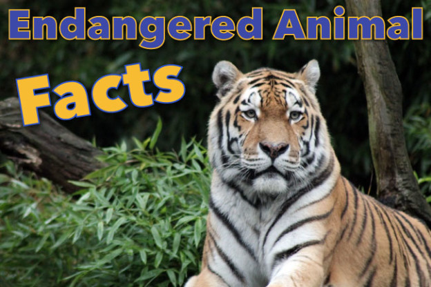 Endangered Animals Facts For Kids