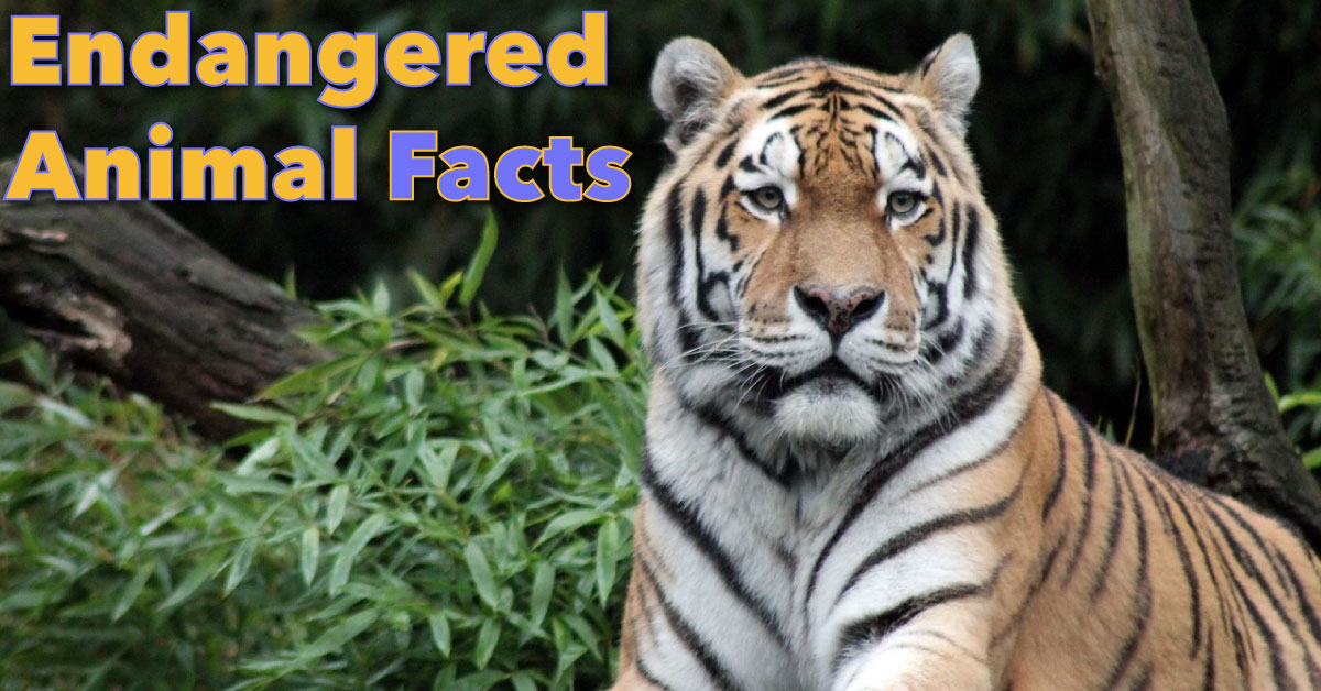 Endangered Animals Facts For Kids: Information & Pictures