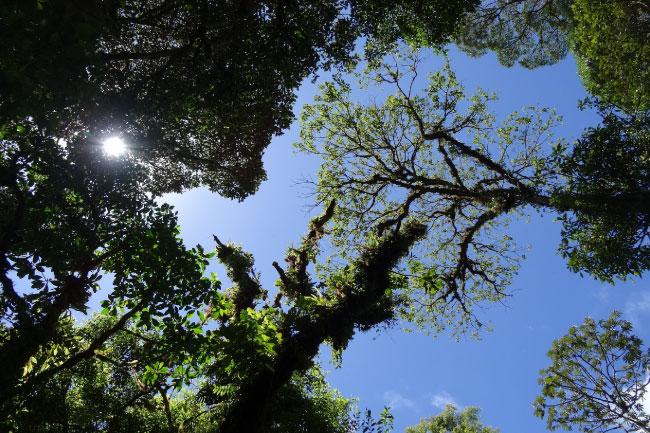 Rainforest Emergent Layer