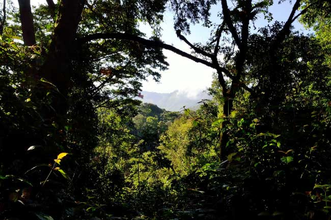 Where Are Rainforests Located? List, Maps, Pictures & Facts