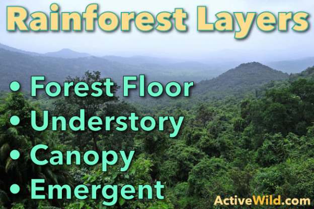 Active Wild & Rainforest Layers: Discover The Layers Of A Rainforest - Facts ...