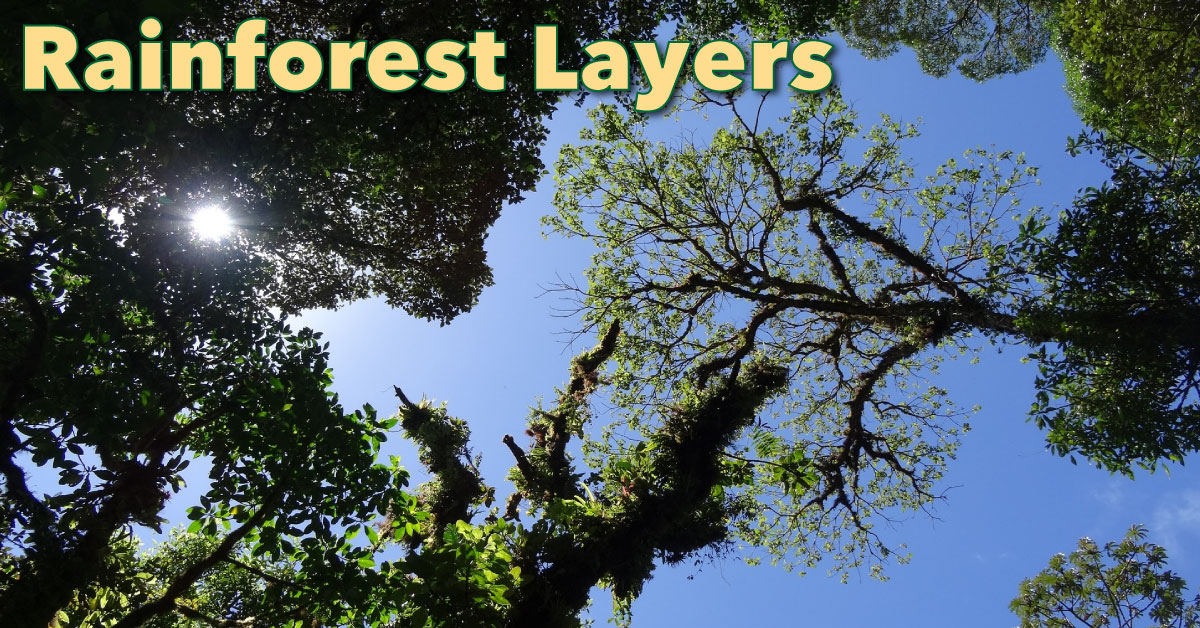 rainforest layers: discover the layers of a rainforest - facts & pictures