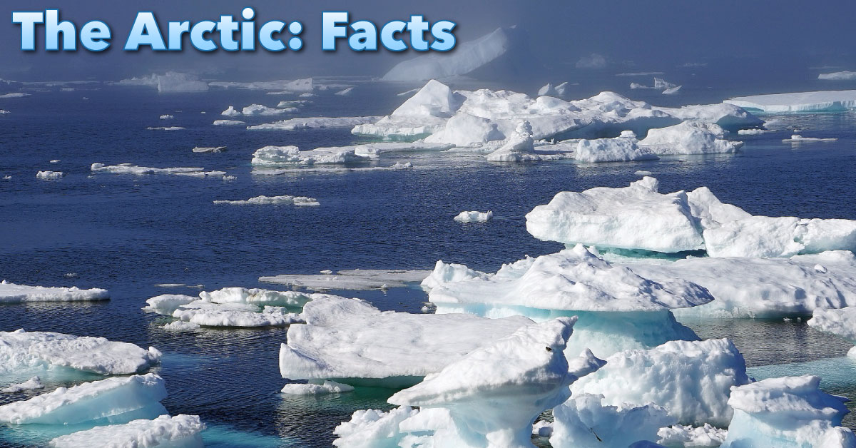 The Arctic Facts For Kids: Information, Pictures u0026 Video
