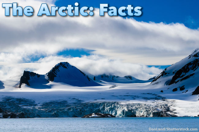 The Arctic Facts For Kids