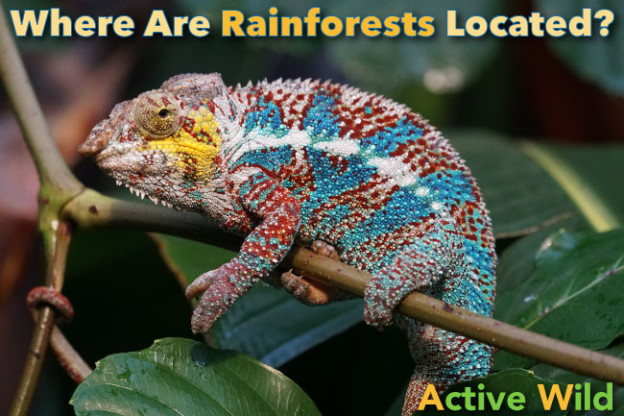 Where Are Rainforests Located