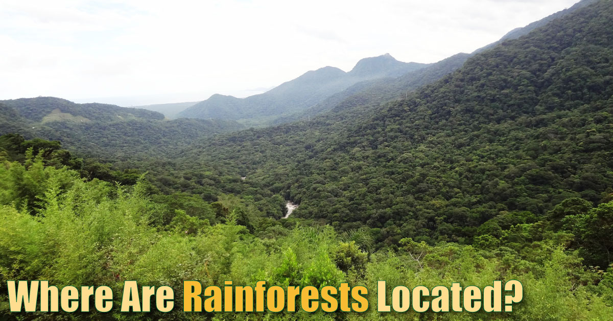 where are rainforests located  list  maps  pictures  u0026 facts