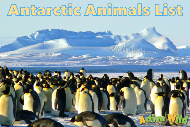 Antarctic Animals List