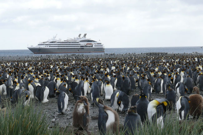 King Penguins In Antarctica