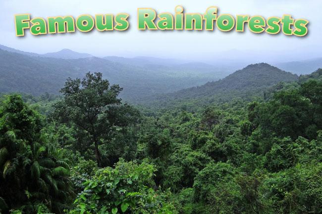 Famous Rainforests List