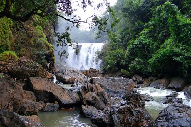 Famous Rainforests Western Ghats