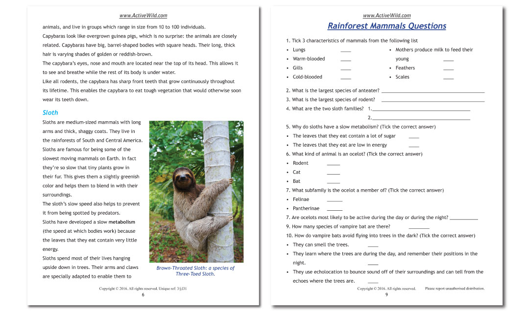 Rainforest Worksheets Printable PDF Factsheets Download – Rainforest Worksheets