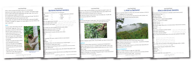 Rainforest Worksheets Pages