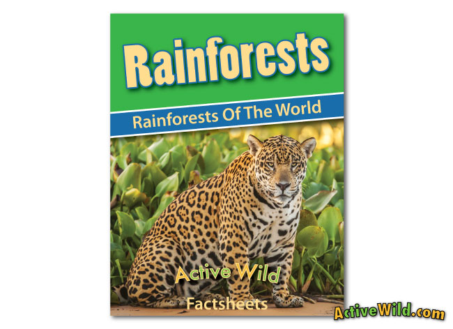Rainforests of the World worksheets