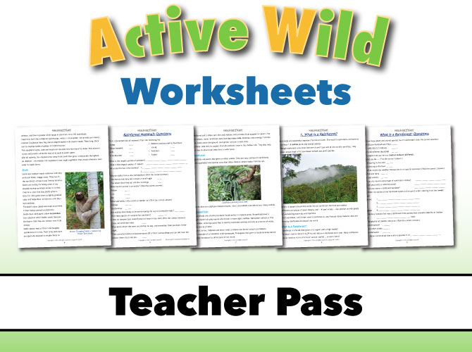 Active Wild Teacher Pass