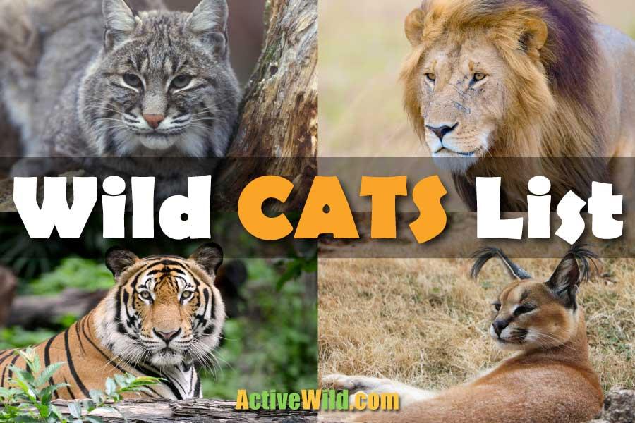 Wild Cats List