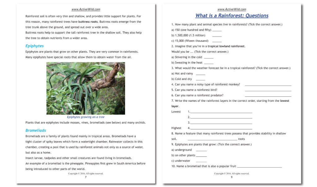 Rainforest Explorer Worksheet Sample Pages