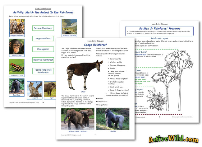 rainforest workseets for kids