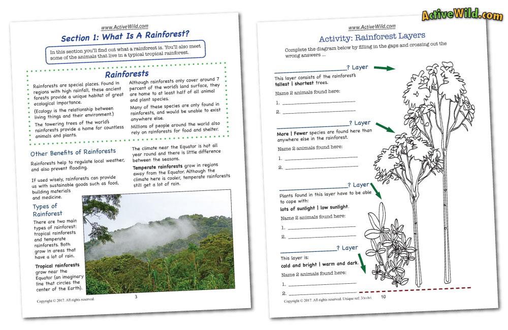 Rainforest Worksheets: Printable PDF Factsheets Download
