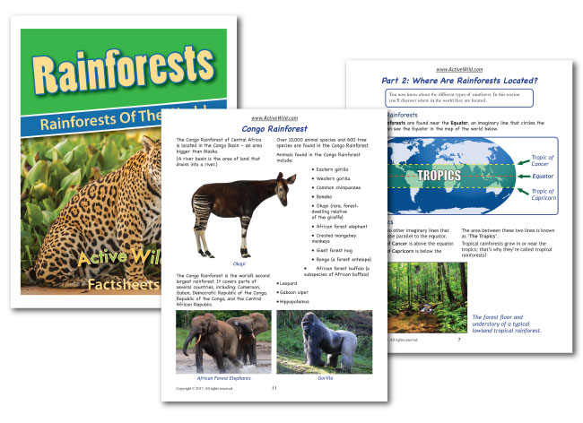 rainforests of the world worksheet sample pages