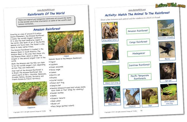 rainforests worksheet sample pages