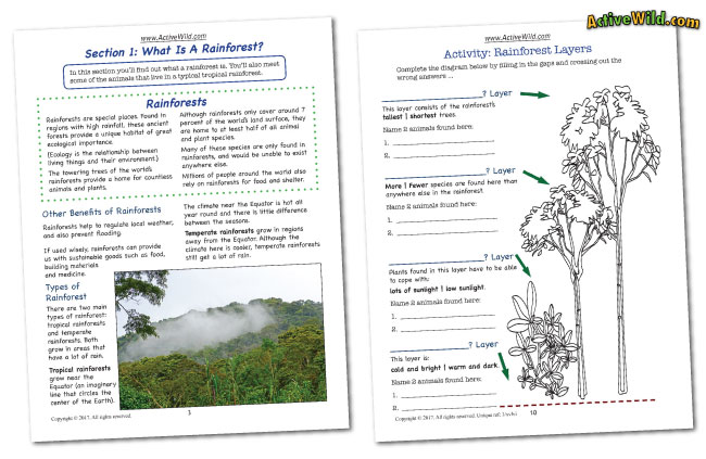 graphic regarding Rainforest Printable identified as Rainforest Worksheets: Printable PDF Factsheets Down load