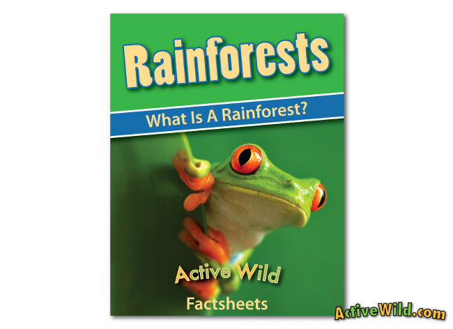 what is a rainforest worksheet cover