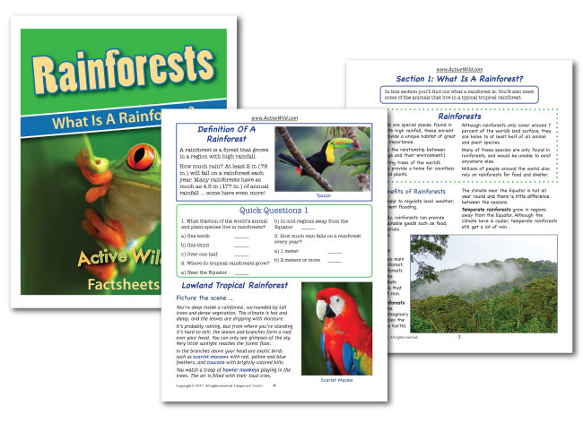 what is a rainforest worksheet sample pages