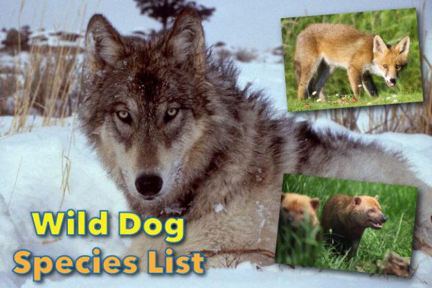 Wild Dog Species List