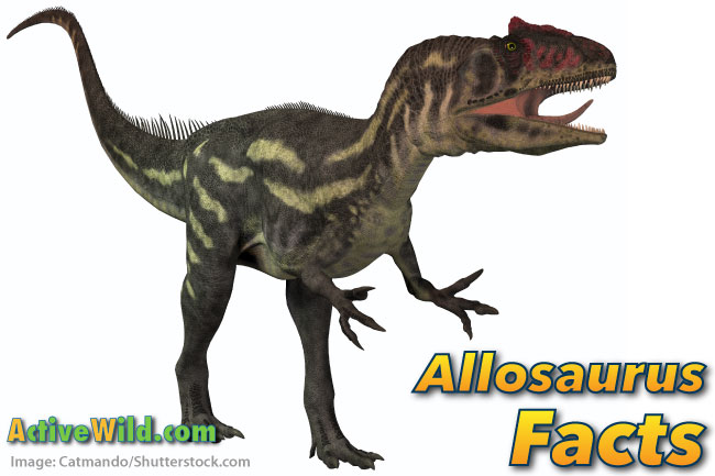 Allosaurus Facts For Kids