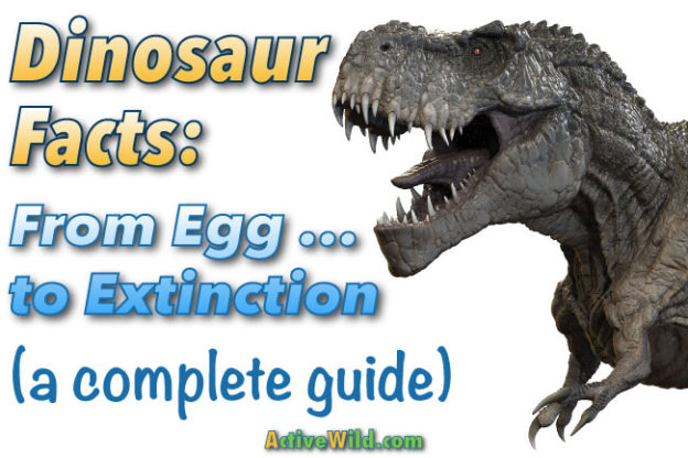 Click image for a complete guide to dinosaurs.