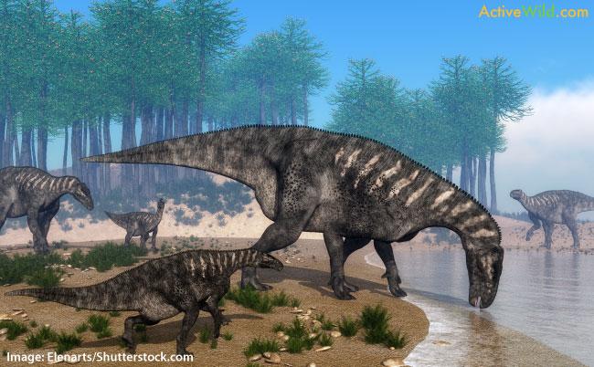 Iguanodon Ornithischia Dinosaur