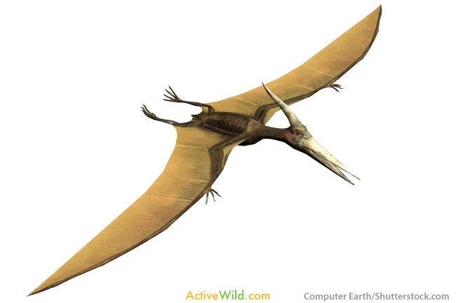 Pterodactyl lived with dinosaurs