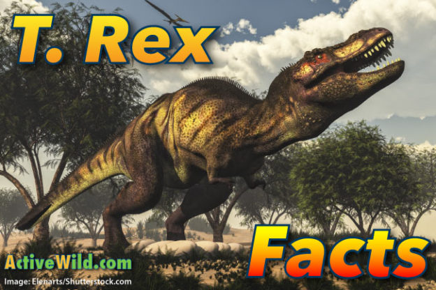 T Rex Facts for Kids: Tyrannosaurus Rex Information, Pictures & Video