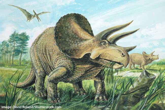 triceratops facts for kids students adults information pictures