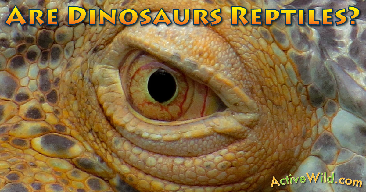 ... Dinosaurs Reptiles? Dinosaur Evolution & Classification For Students