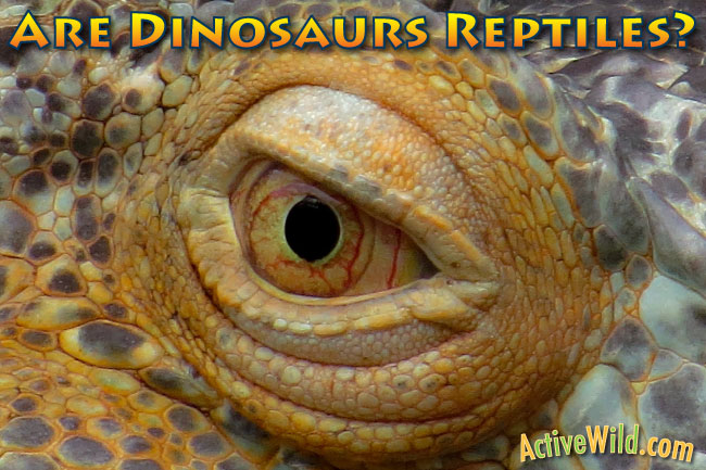 Are Dinosaurs Reptiles