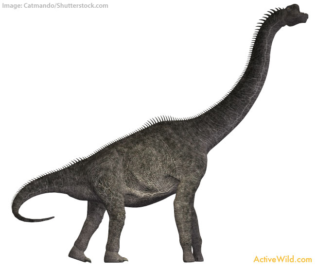Brachiosaurus white background