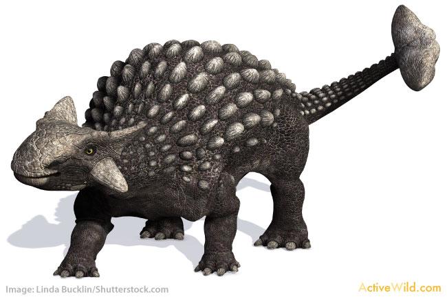 Dinosaur Names And Pictures Ankylosaurus