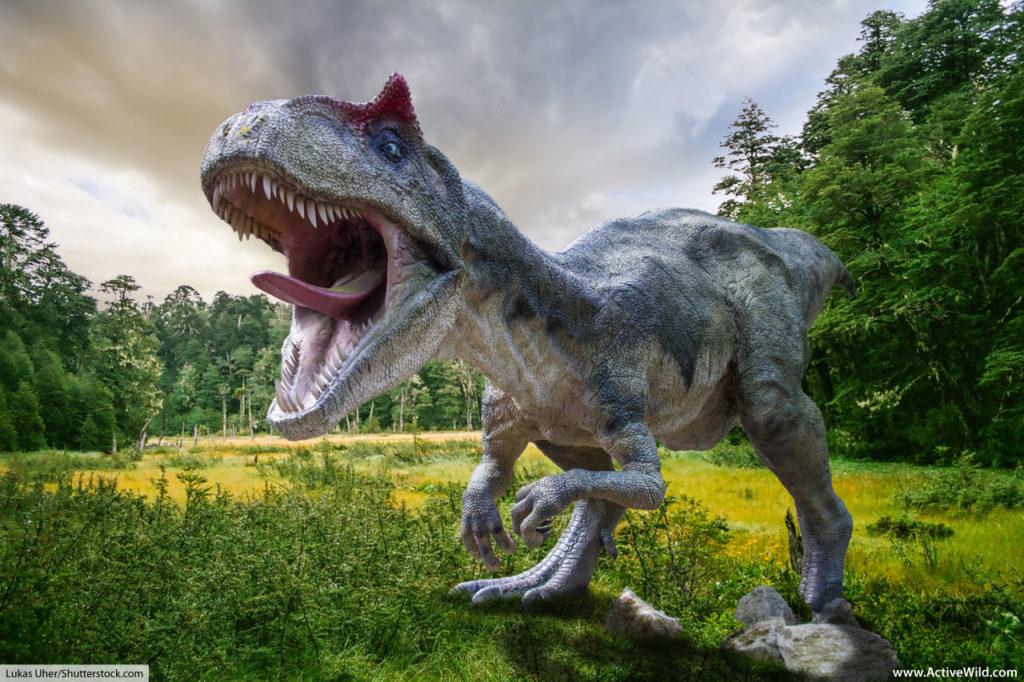 Albertosaurus Tyrannosaurid