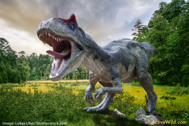 Albertosaurus Facts Pictures Information Kids Students Adults on Ur Facts For Kids