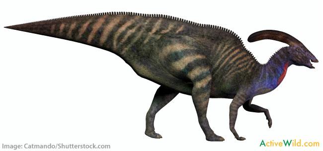 Dinosaur Facts For Kids Edmontosaurus