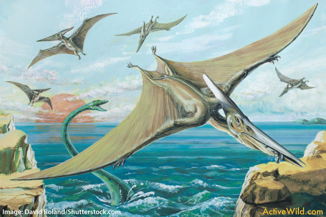 Pterodactyl flying