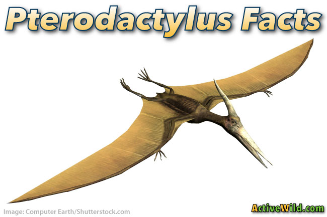 Pterodactylus Facts For Kids