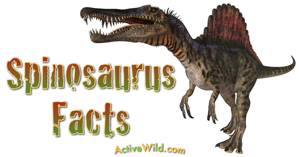 Spinosaurus Facts for Kids & Students - Information & Pictures