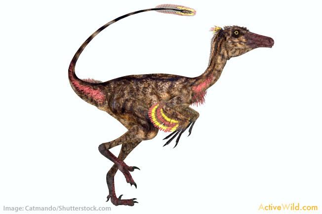 Giganotosaurus List Of Dinosaurs